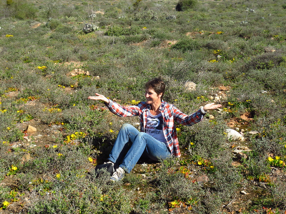 Dr Marienne de Villiers in a field of flowering Glottiphylum cruciatum, a rare member of the vygie family found only in the Little Karoo